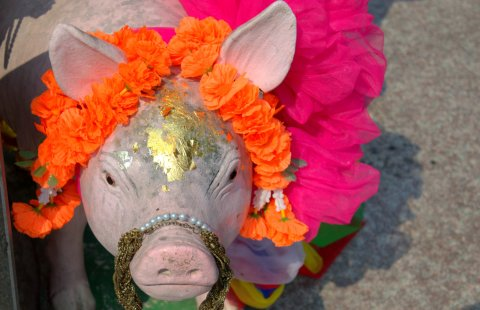 mango tango pig