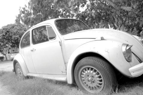 beetle bw