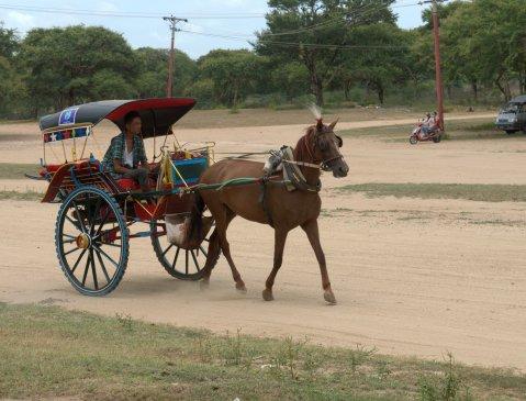 horsey bagan 2