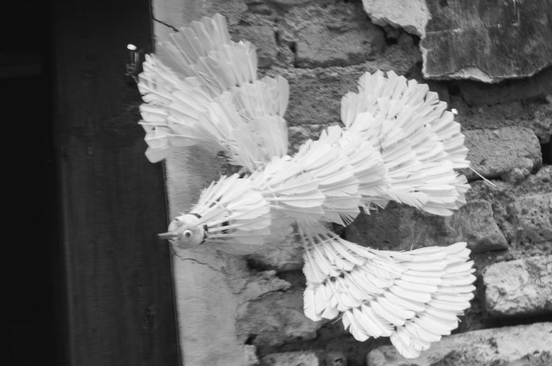 birdie bw