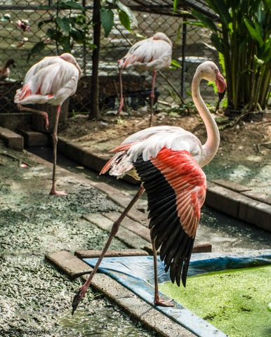 flamingo171006