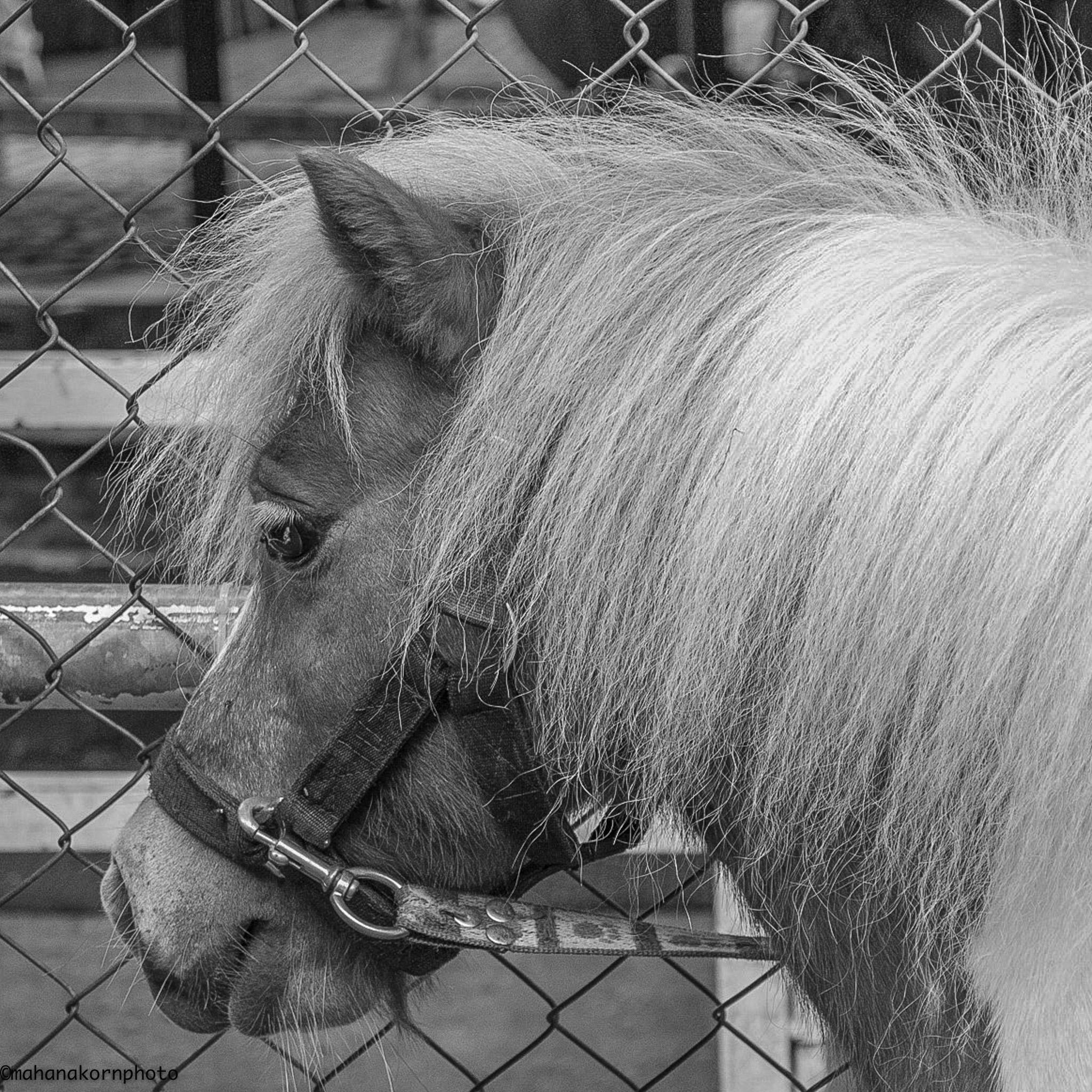 horse bw01171006
