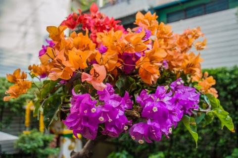 flowerpot16022001
