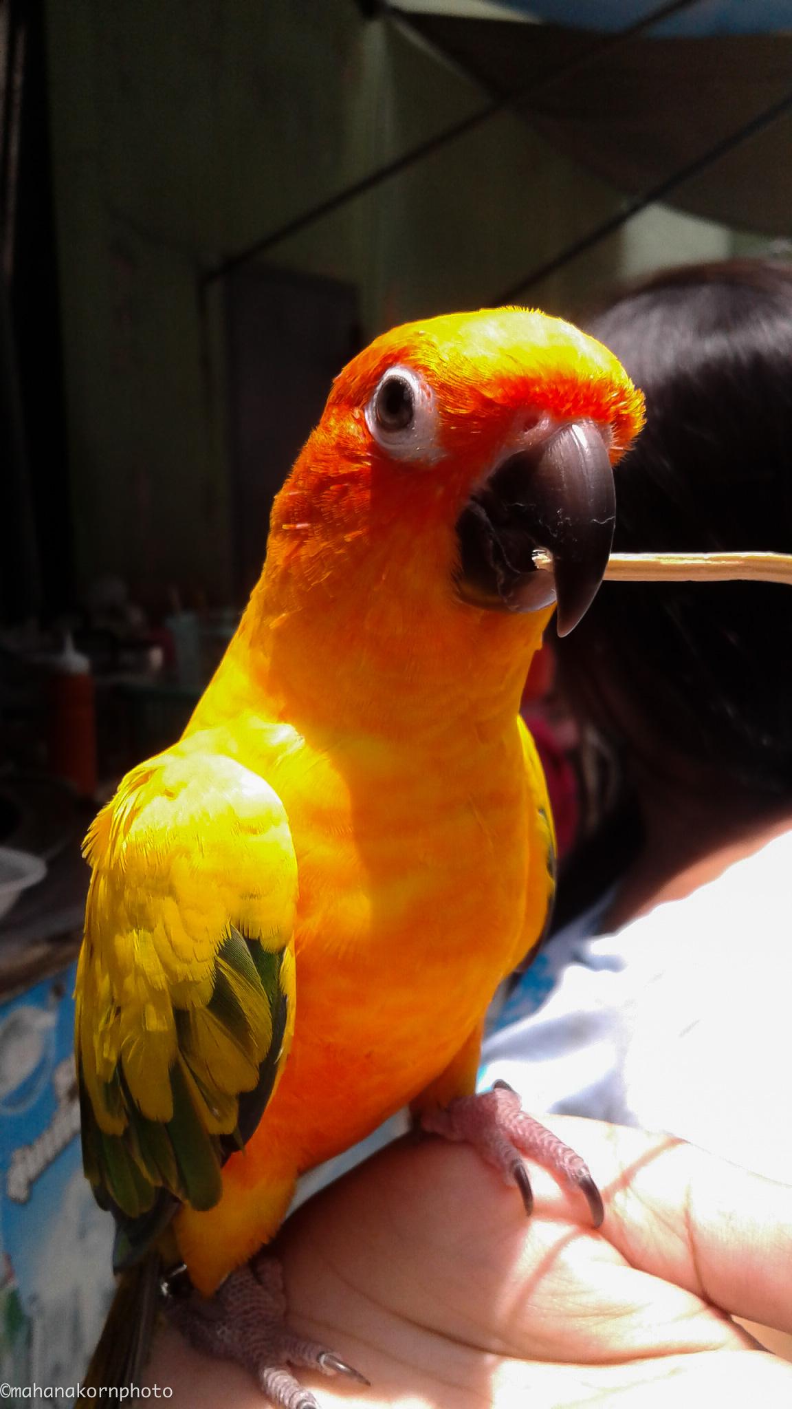 parrot18070801