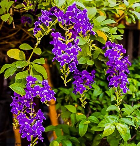 purple16041201