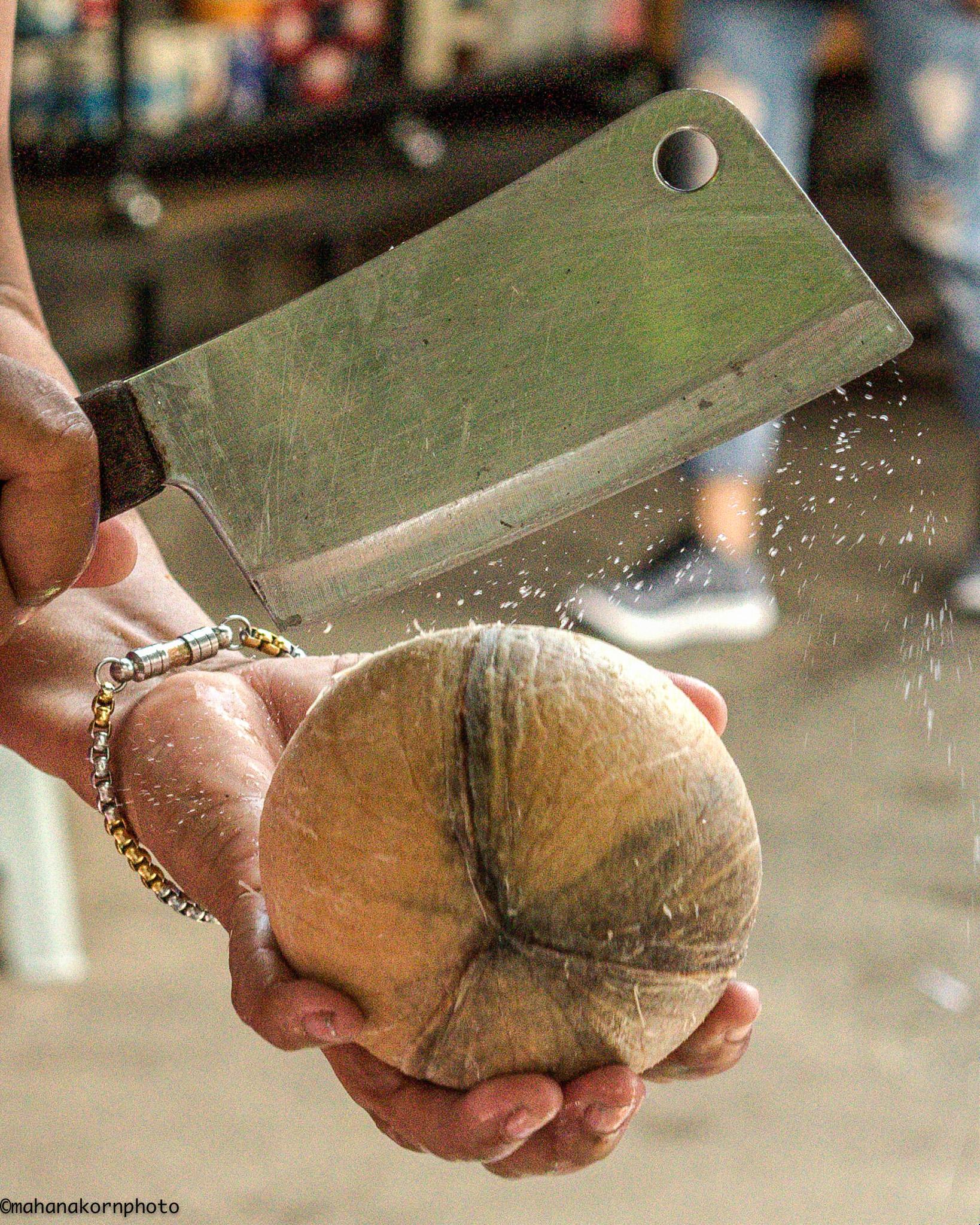 coconut01161001