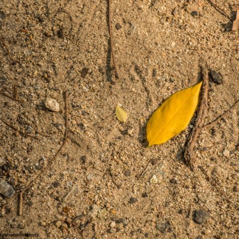 dirt01180317