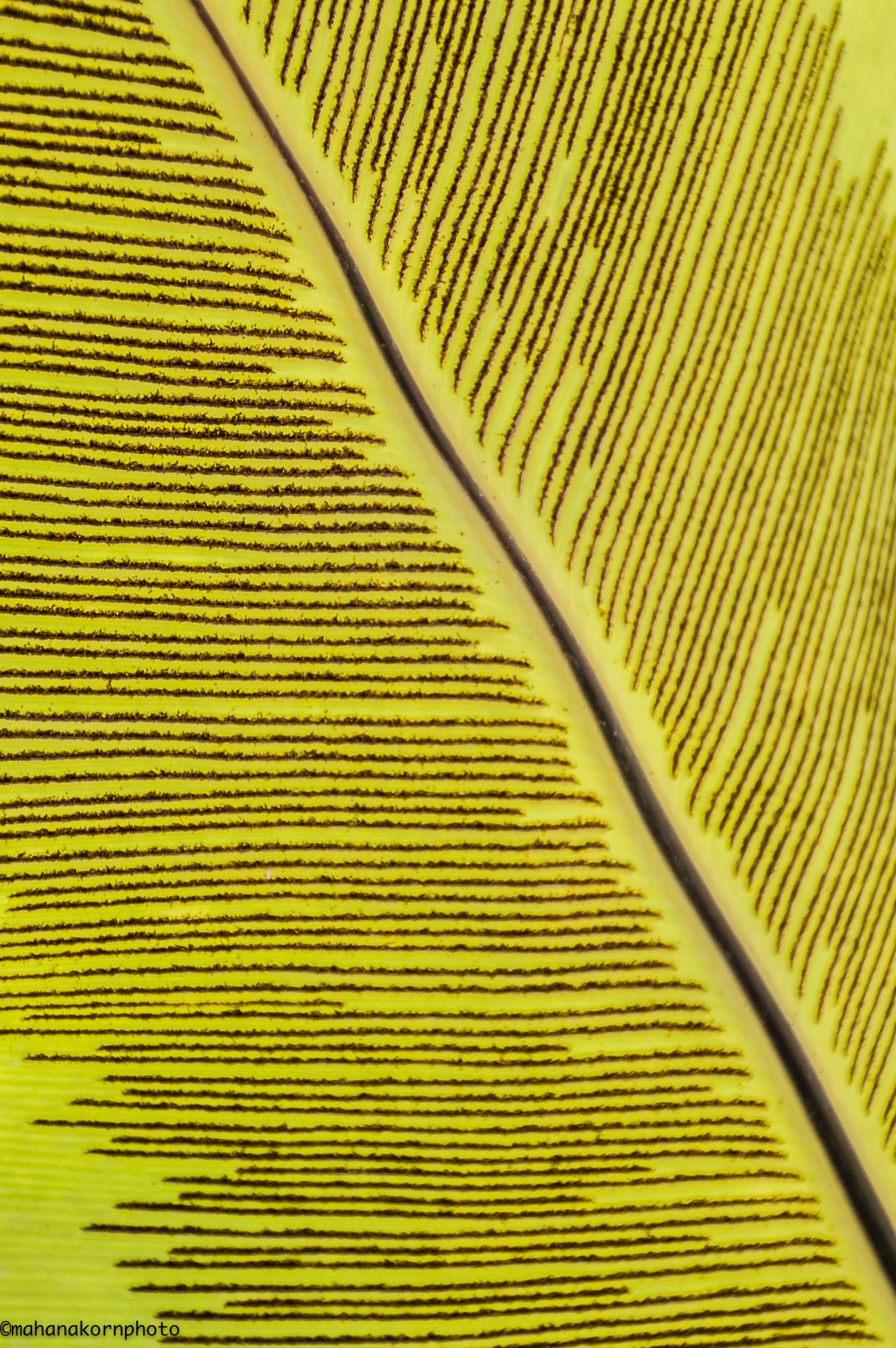 leaf01180817
