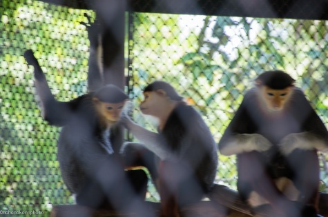 monkeys01180905