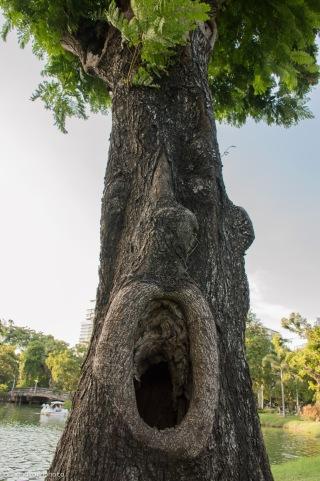 tree01180926