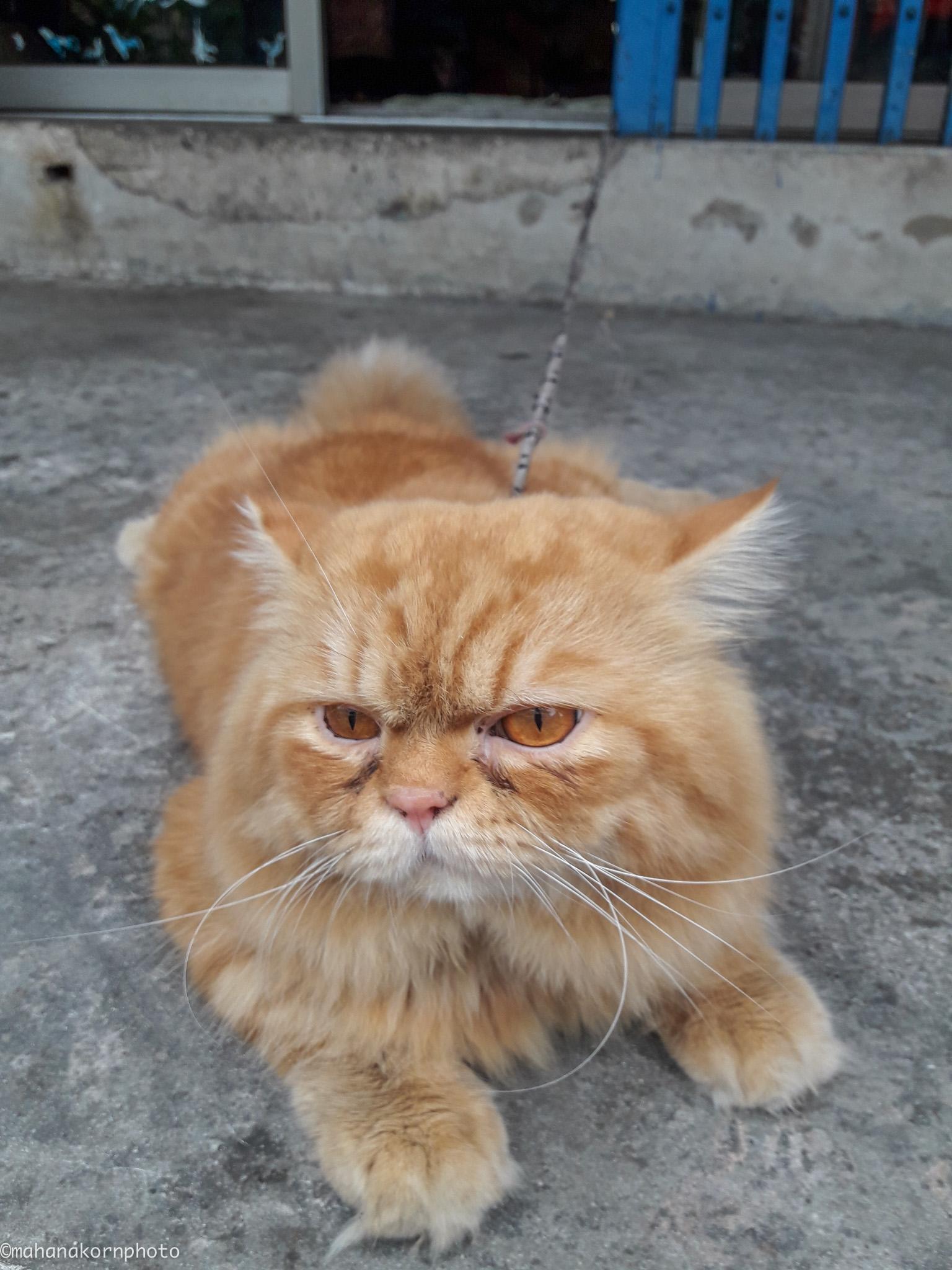 orange cat01181110
