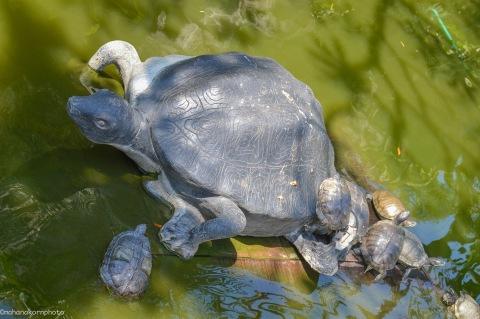 turtle01181102